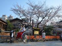 Груповий тур на цвітіння сакури до Японії